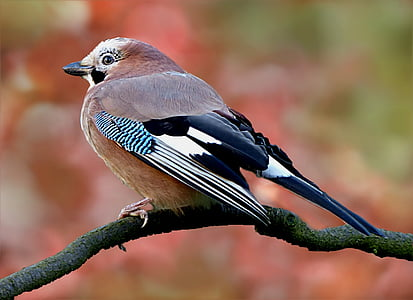 brown and black bird tilt shift lens photo