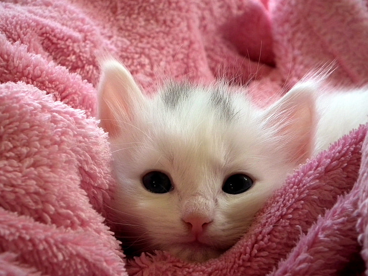 white kitten on pink towel