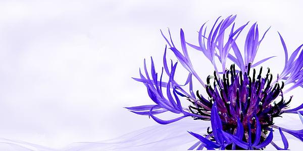 purple cluster flower