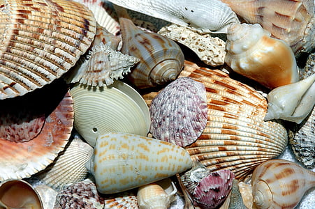assorted brown and white seashells