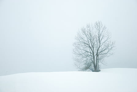 bare tree on snowy weather
