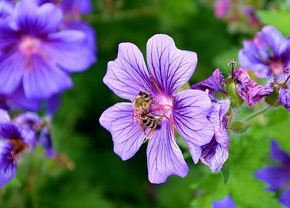 brown bee on purple flower