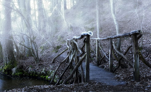 brown wooden bridge in the woods during daytime
