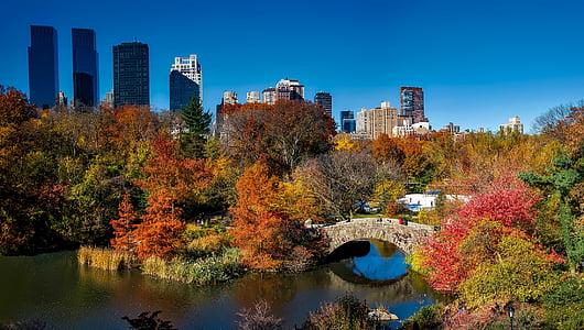 trees and bridge at daytime