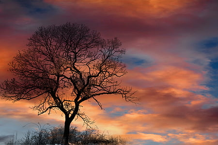 silhouette of a tree during sunset