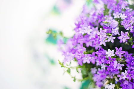 purple flowers in shallow photography