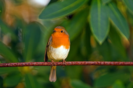 brown and orange bird on brown tree branch
