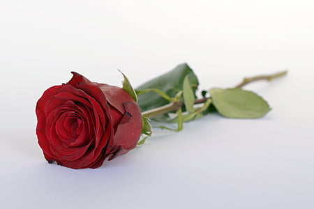 closed up photo of red rose flower