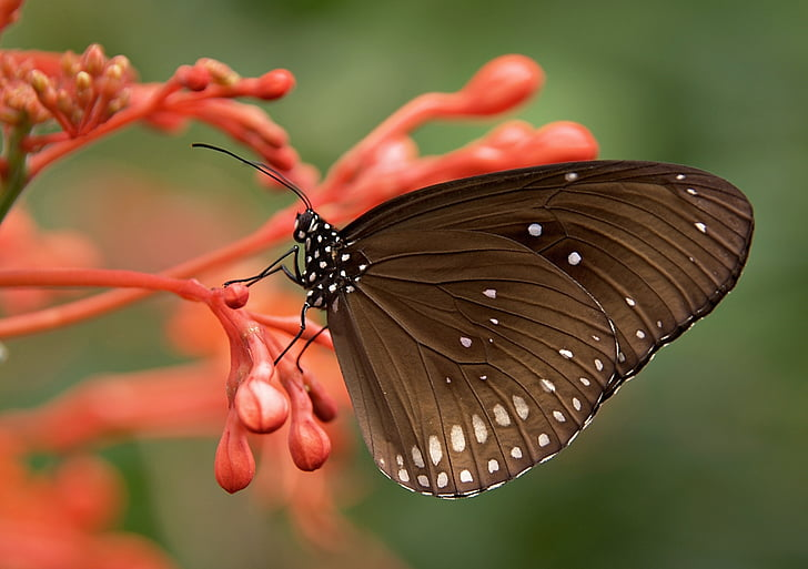 close-up photography of black butterfly perching on orange flower