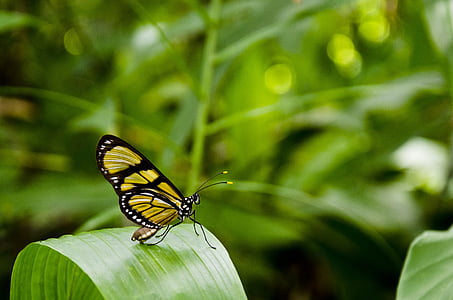 close-up photo of yellow and black butterfly perching on green leaf during daytime