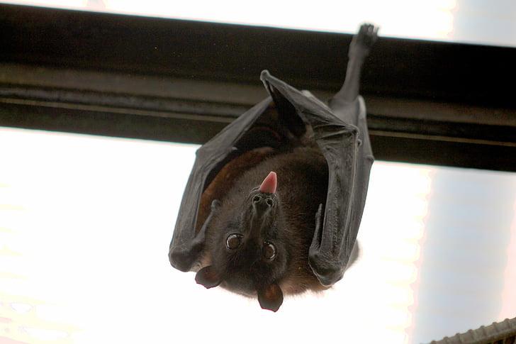 black bat perched on wall