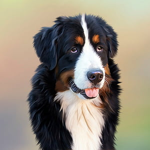 short-coated black-white-and-brown dog