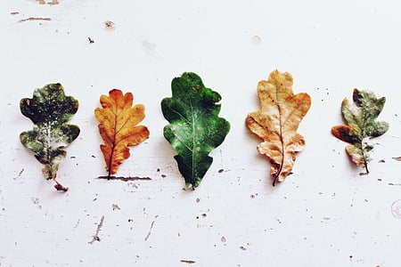 five assorted-colored leafs