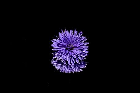 purple floral illustration