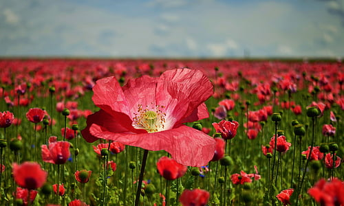 selective photo of red petaled flower