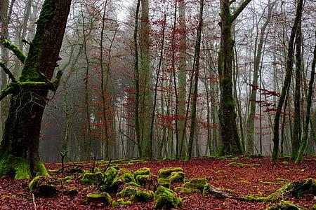 woods under cloudy sky