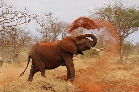 elephant tossing soil