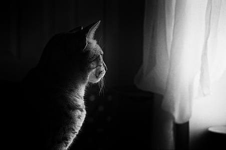 grayscale photo of a cat near window curtains