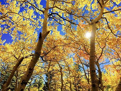 brown leaf tree during daytime