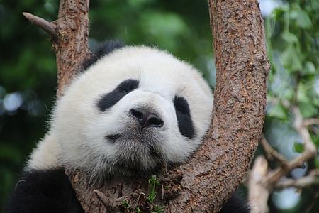 shallow focus photography of panda
