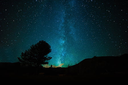 silhouette photograph of tree under starry night