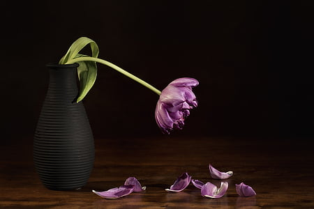 purple flower with petal falling at table