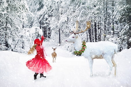white dear on snow