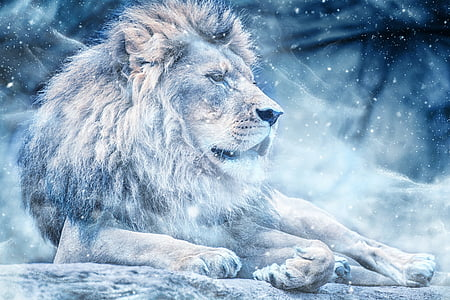 lion during winter season poster