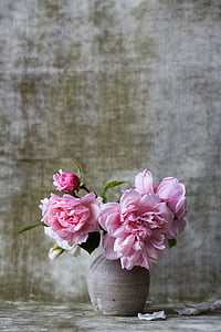 closeup photography of pink petaled flowers in vase