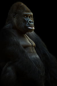 closeup photo of ape