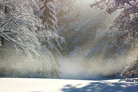 trees with snow covers
