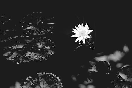 selective color of white petaled flower