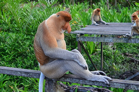 gray and brown animal sitting on wooden bar