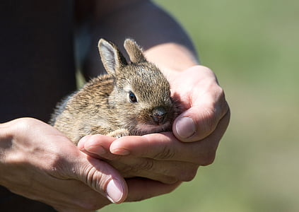 person holding brown bunny