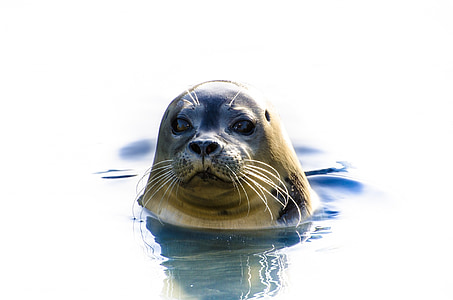 seal swimming in body of water