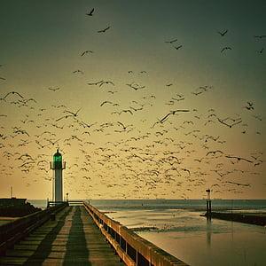 flock of birds across the bridge