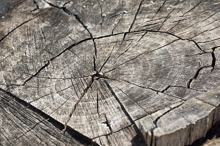 gray tree log