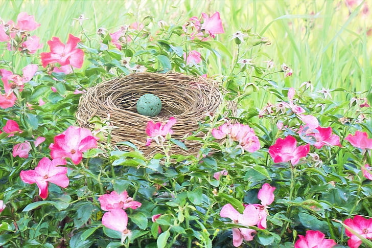 green bird egg on nest during daytime