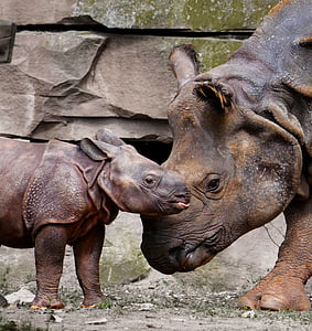 adult and baby rhinoceros during daytime