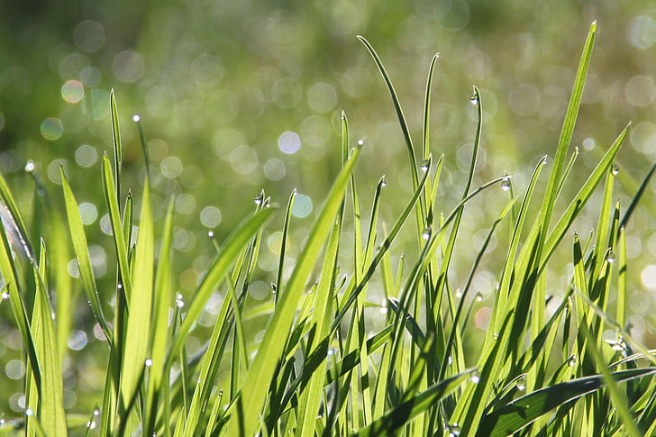 selective focus photography of green grasses with water dew