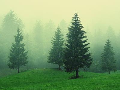 green leaf trees on foggy day