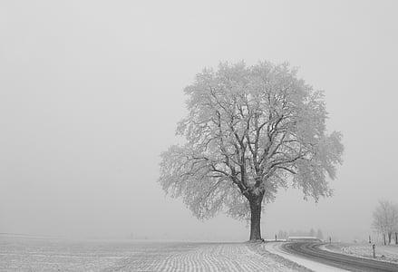 photo of bare tree near road