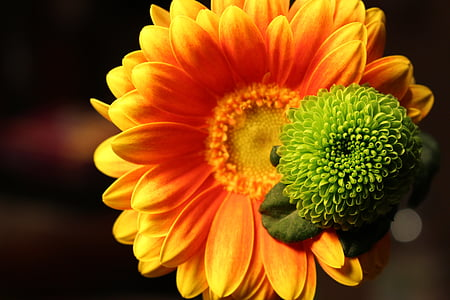 yellow sunflower flower close-up photo