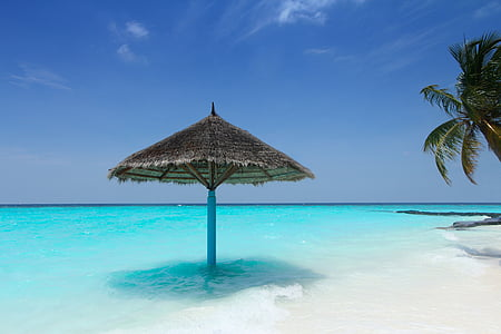 palm leaf patio umbrella on beach shore