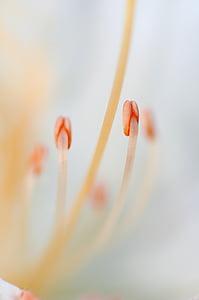 close up photo of pollen