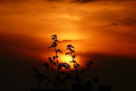 black tree under sun