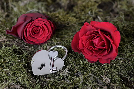 two red roses and stainless steel heart padlock