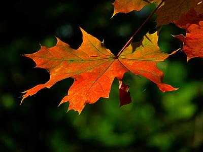 photo of orange leaf