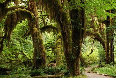 green rainforest at daytime