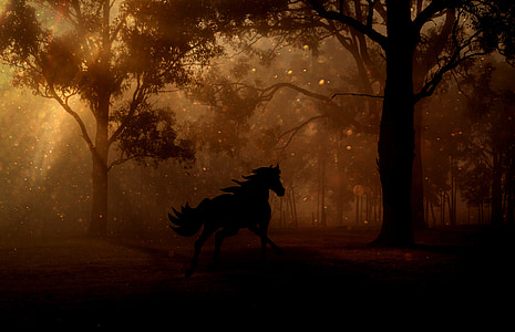 silhouette of horse on forest